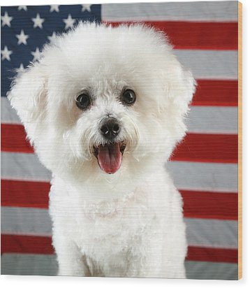 Fifi Loves America Wood Print by Michael Ledray
