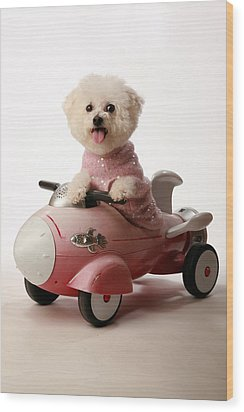 Fifi Ready For Take Off Wood Print by Michael Ledray