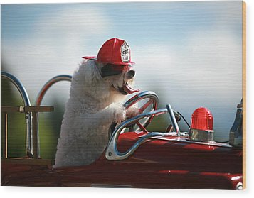 Fifi Saves The Day Wood Print by Michael Ledray