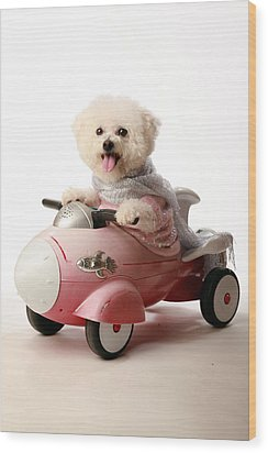 Fifi The Bichon Frise And Her Rocket Car Wood Print by Michael Ledray