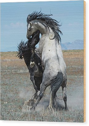 Wood Print featuring the photograph Fighting Black And Gray Stallions by Mary Hone