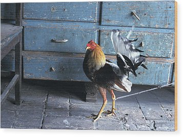 Fighting Cock Wood Print