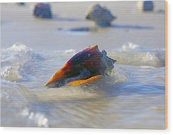 Fighting Conch On Beach Wood Print by Robb Stan