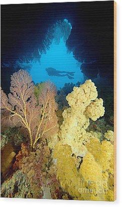 Fiji Underwater Wood Print by Dave Fleetham - Printscapes