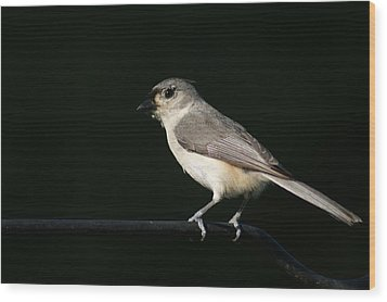 Wood Print featuring the photograph Finch by Heidi Poulin