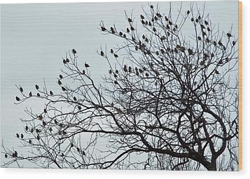 Finches To The Wind Wood Print