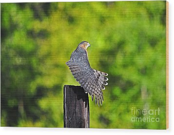 Wood Print featuring the photograph Fine Feathers by Al Powell Photography USA