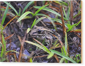 Wood Print featuring the photograph Fine Frog by Al Powell Photography USA