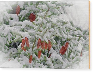 Wood Print featuring the photograph Fir Cones On White Photo Art by Sharon Talson