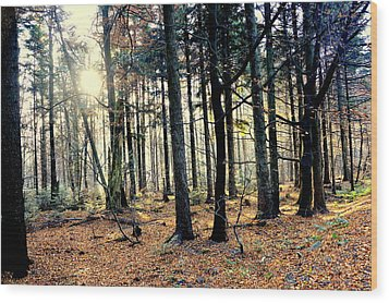Fir Forest-3 Wood Print
