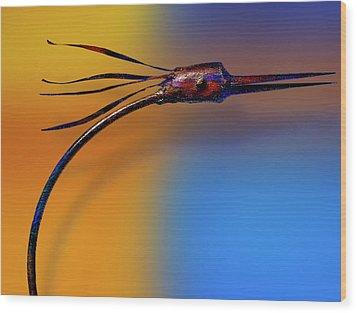 Wood Print featuring the photograph Fire Bird by Paul Wear