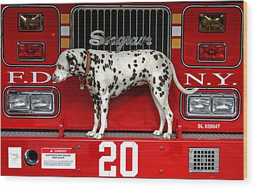Fire Dog Wood Print by Bryan Hochman
