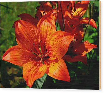 Wood Print featuring the photograph Fire Lilies by Marilynne Bull