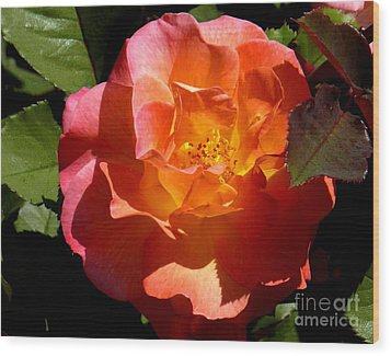 Wood Print featuring the photograph Fire Rose by Terri Thompson