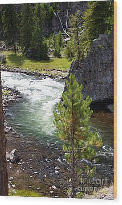 Firehole Fin Wood Print by Marty Koch