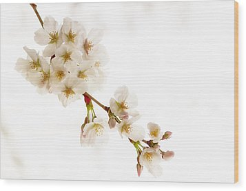 Wood Print featuring the photograph first blossoms on the Basin by Edward Kreis