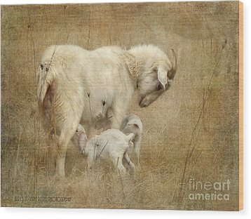 First Day Of Life Wood Print by Kathy Russell
