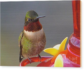 First Hummer Of 2015 Wood Print