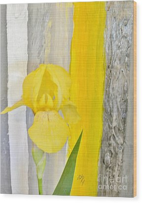 First Yellow Iris Wood Print by Marsha Heiken