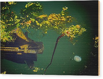 Wood Print featuring the photograph Fish Eye View by Dale Stillman