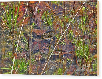 Wood Print featuring the photograph Fish Faces Frog by Al Powell Photography USA