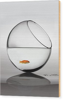 Fish In Fish Bowl Stressed In Danger Wood Print by Paul Strowger