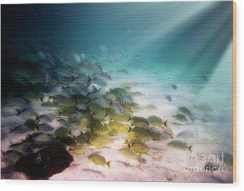 Fish Swim In The Light Wood Print by Sven Brogren