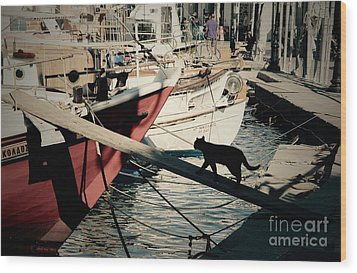 Fisherman's Cat  Wood Print by Louise Fahy