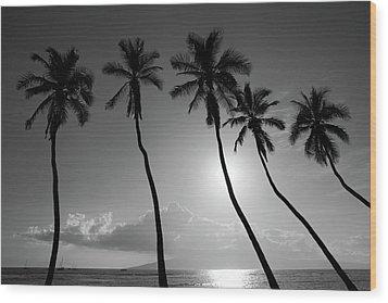 Five Coconut Palms Wood Print by Pierre Leclerc Photography