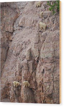 Five Goats Climbing Wood Print