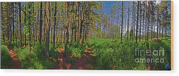 Five Paths Wood Print