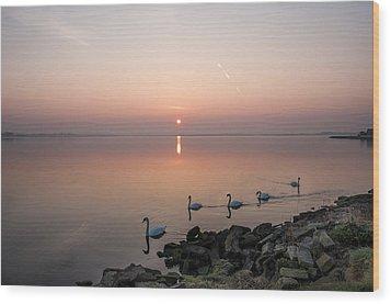 Five Swans At Dawn Wood Print by Martina Fagan