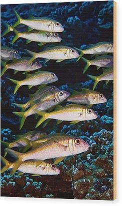 Fla-150811-nd800e-26035-color Wood Print