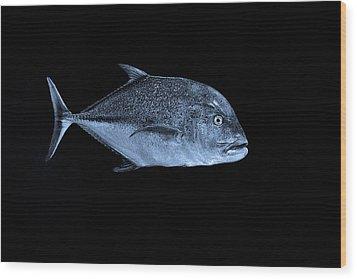 Fla-150811-nd800e-26052-bw-blue Wood Print