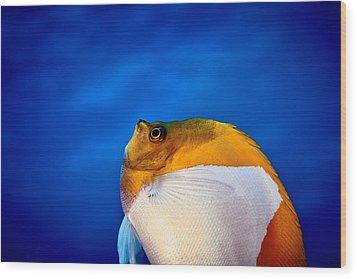 Fla-150811-nd800e-26086-color Wood Print