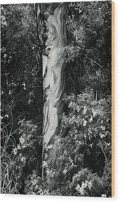 Fla-150523-nd800e-24853-bw-green Wood Print