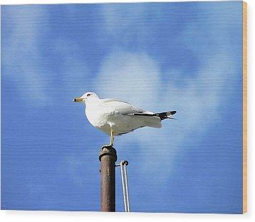 Flagpole Gull Wood Print by Al Powell Photography USA