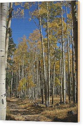 Flagstaff Aspens 799 Wood Print