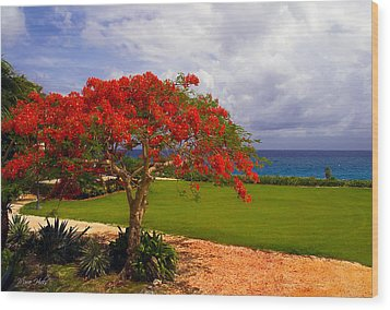 Flamboyant Tree In Grand Cayman Wood Print