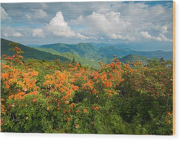 Flame Azaleas Roan Highlands Appalachian Trail Wood Print by Rick Dunnuck