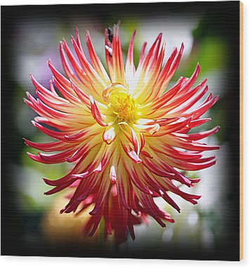 Wood Print featuring the photograph Flaming Beauty by AJ Schibig