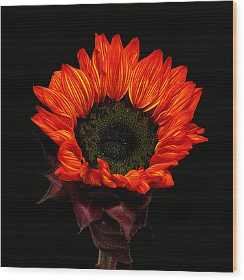 Wood Print featuring the photograph Flaming Flower by Judy Vincent