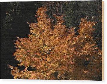 Flaming Tree Brush Wood Print by Deborah  Crew-Johnson
