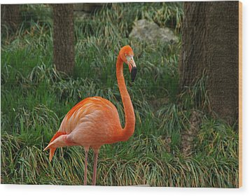 Flamingo 1 Wood Print by Robyn Stacey
