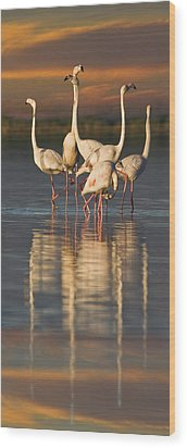 Flamingo Dance Wood Print by Basie Van Zyl