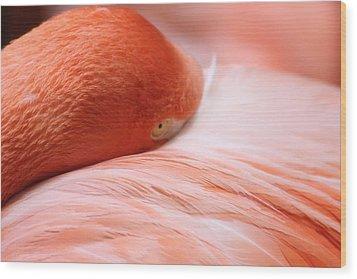 Wood Print featuring the photograph Flamingo by Elizabeth Budd