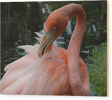 Flamingo Feathers Wood Print