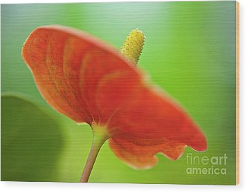 Flamingo Flower 2 Wood Print by Heiko Koehrer-Wagner