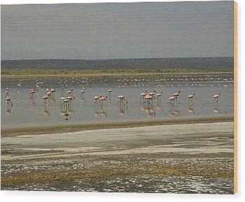 Flamingos Magadi Hot Springs Kenya Wood Print