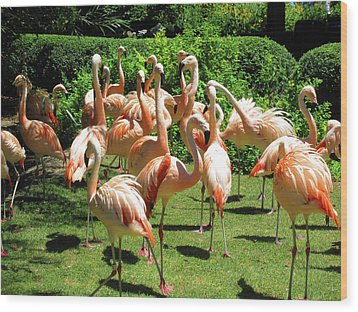 Wood Print featuring the photograph Flamingo Party by Tammy Sutherland